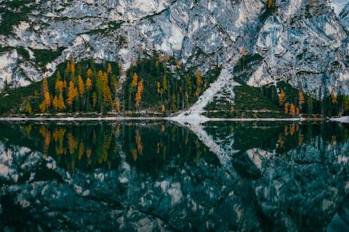 反射, 日光, 木, 水の無料の写真素材