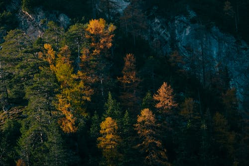 Ingyenes stockfotó erdő, fák, festői, hegyek témában