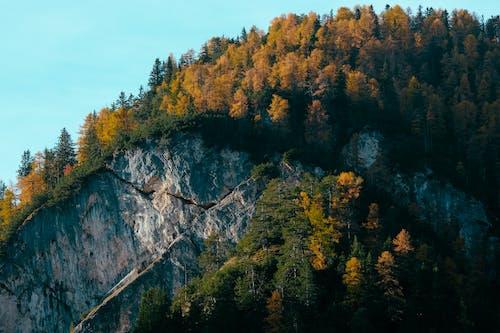 Fotobanka sbezplatnými fotkami na tému detailný záber, hora, ihličnany, krajina
