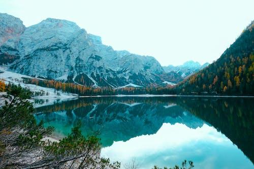 Foto d'estoc gratuïta de aigua, arbres, bonic, Fons de pantalla HD