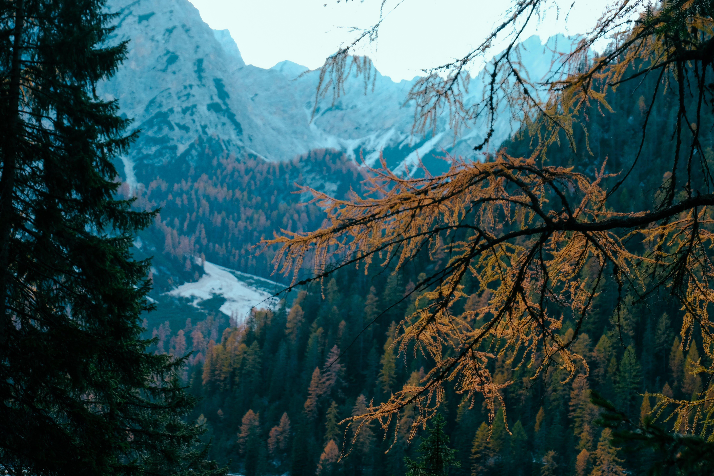 Photos gratuites de à feuilles persistantes, arbres, bois, branche