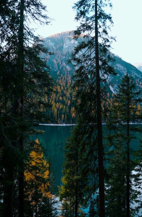 вода, гора, деревья