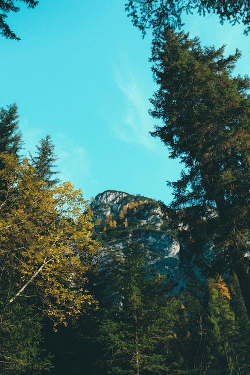 Δωρεάν στοκ φωτογραφιών με αειθαλής, γραφικός, δέντρα, ελαφρύς