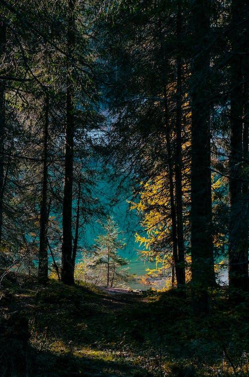 Foto profissional grátis de alvorecer, amanhecer, ao ar livre, árvores