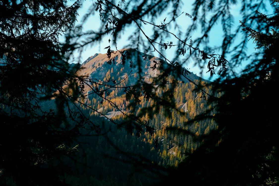 гілки, Денне світло, дерева