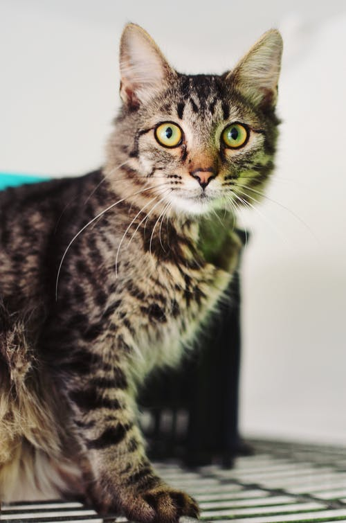 Free stock photo of cat, colourful, cool
