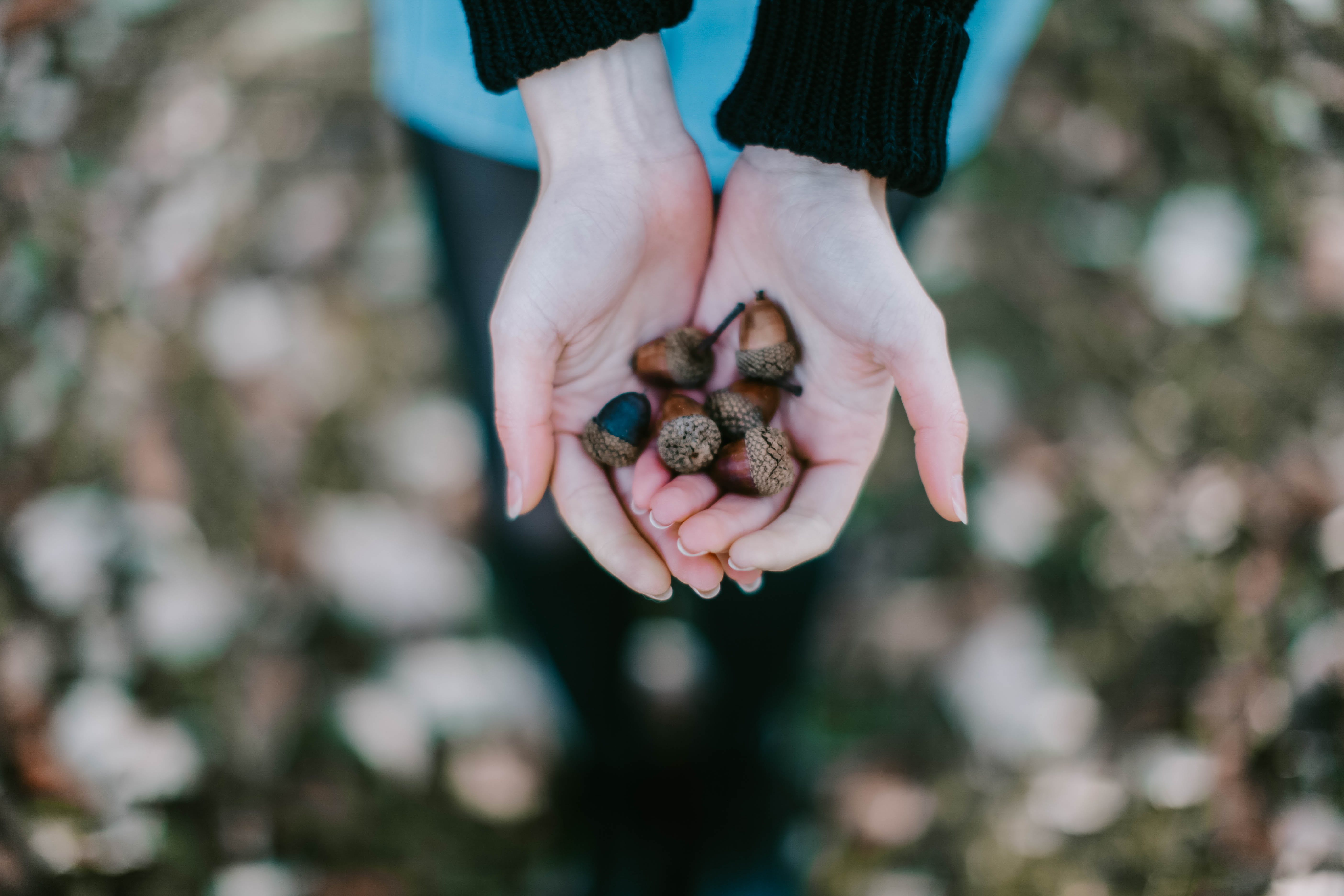 Selective Focus Photography of Person Holding Brown Acorns