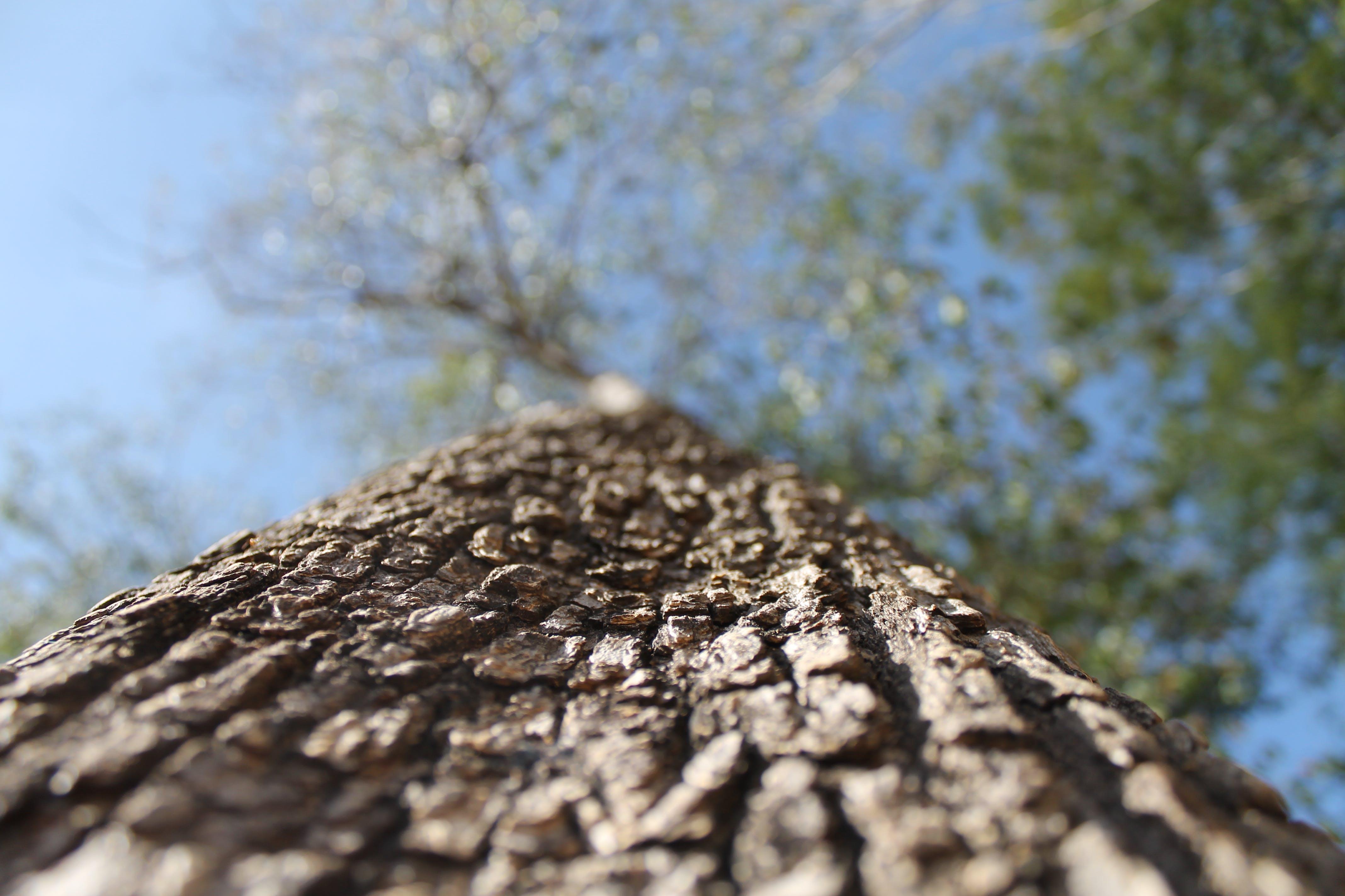 Free stock photo of brasil, nature, tree