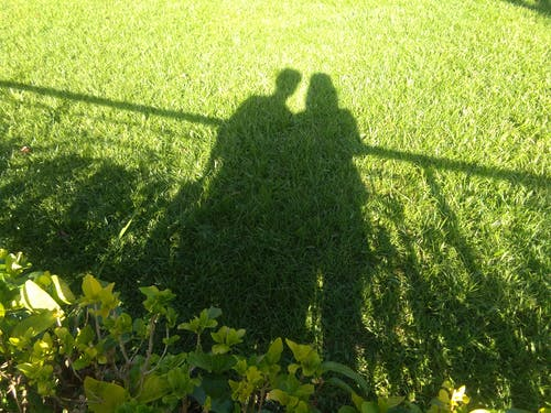 Free stock photo of grass field, green, light and shadow, love