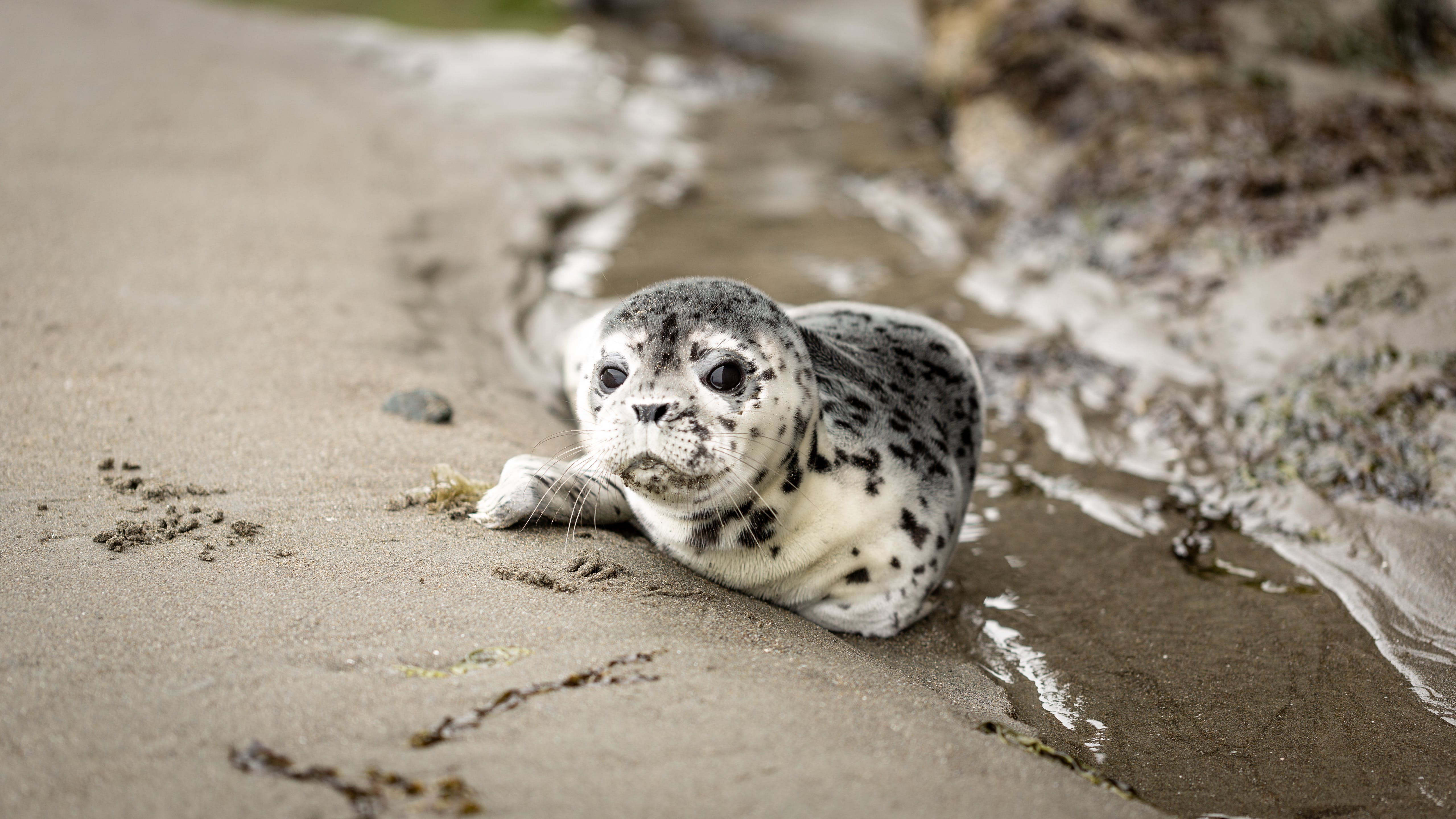 White and Black Seal on Shoreline
