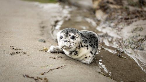 Darmowe zdjęcie z galerii z dzika przyroda, dziki, mała foczka, mały