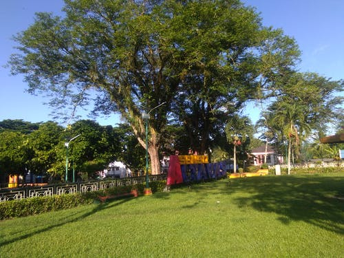 Free stock photo of green, park, plaza, sunlight