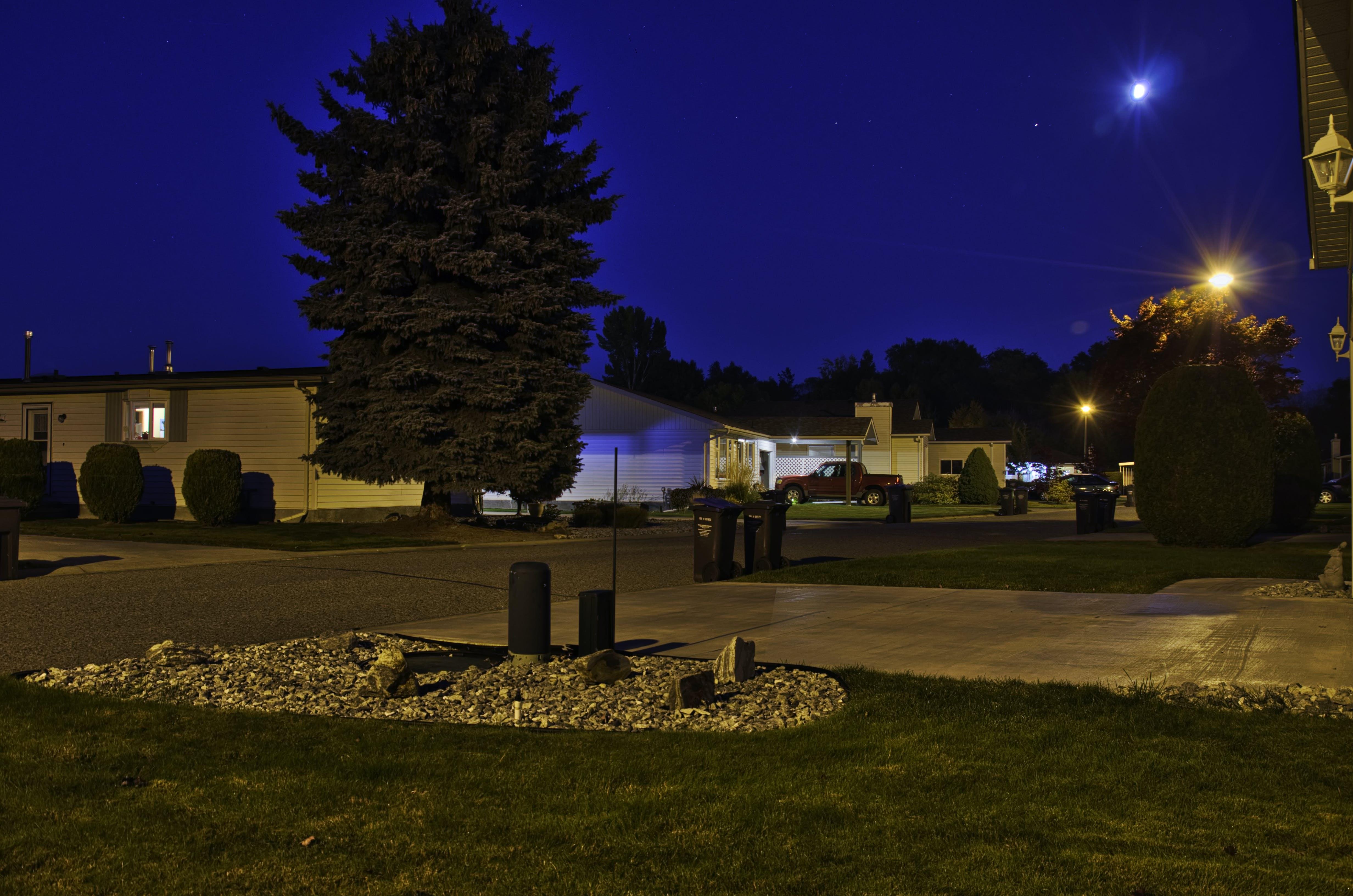 Free stock photo of evening sky, fir tree, light