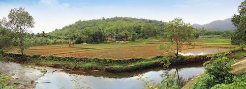 Kostnadsfri bild av banan träd, grannskap, naturlig skönhet, trädtopp
