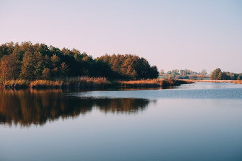Imagine de stoc gratuită din apă, apă curgătoare, arbore, armonie