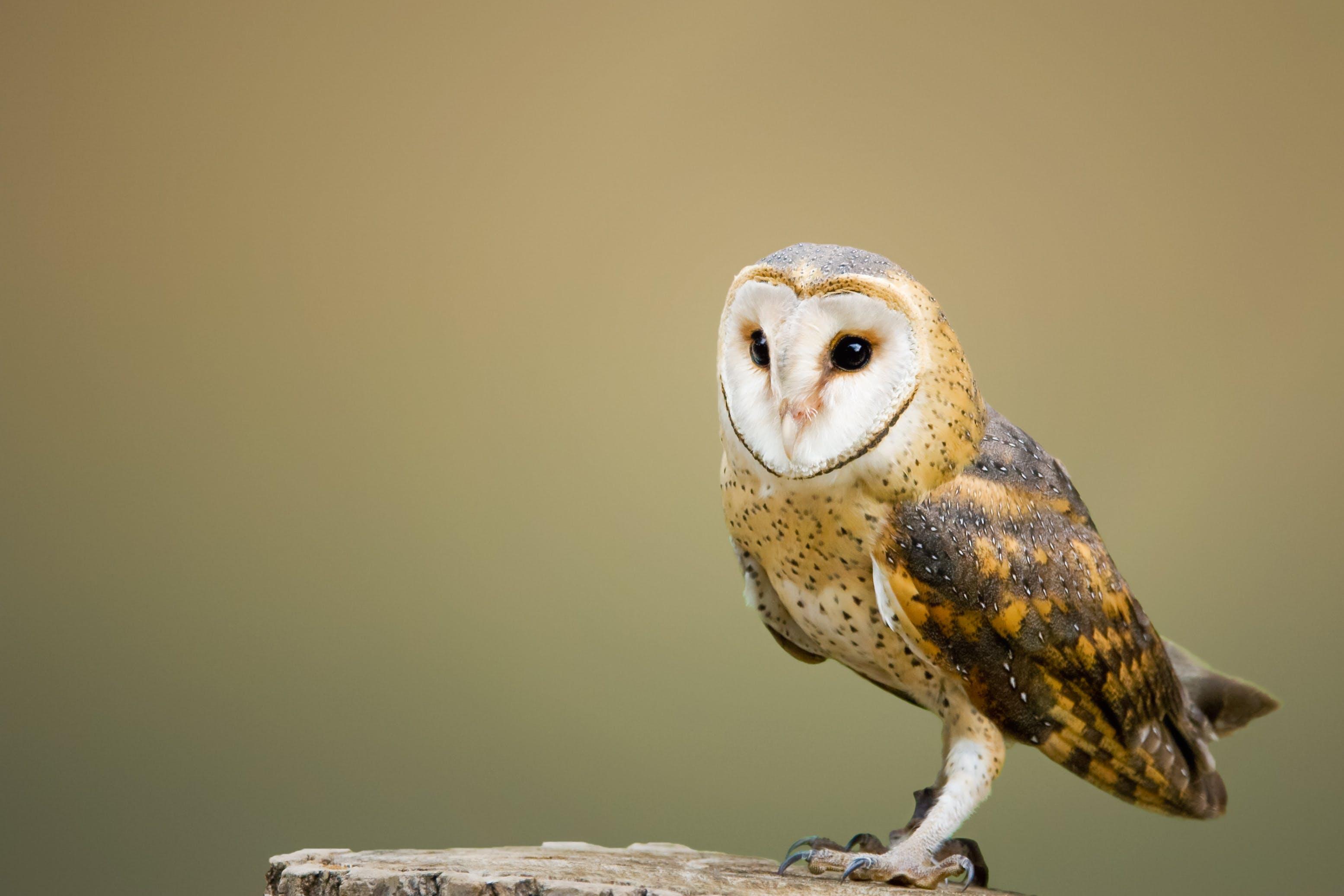 Beige and Brown Owl on Top of Tree Log