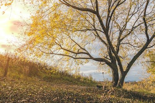 Základová fotografie zdarma na téma dřevo, krajina, malebný, podzimní listoví