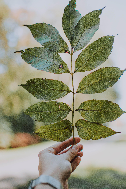 Kostenloses Stock Foto zu draußen, festhalten, grün, hand