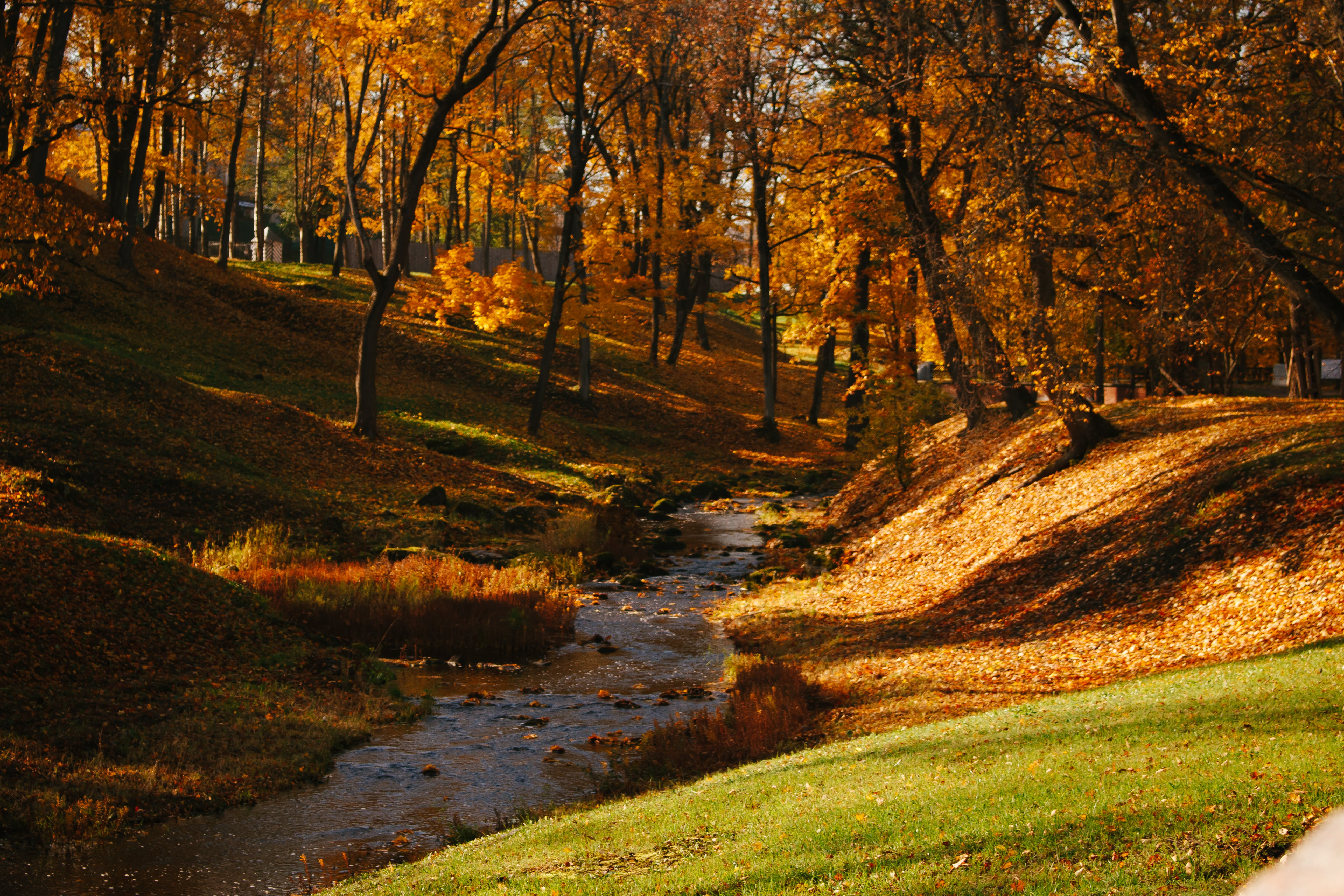 Free stock photo of autumn, nature, river, trees