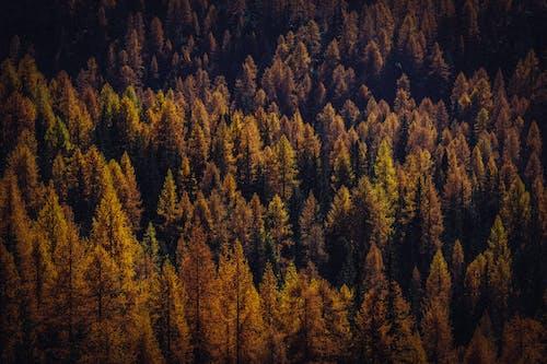 Gratis stockfoto met Bos, bossen, conifeer, daglicht