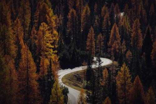 Kostnadsfri bild av barrträd, dagsljus, landskap
