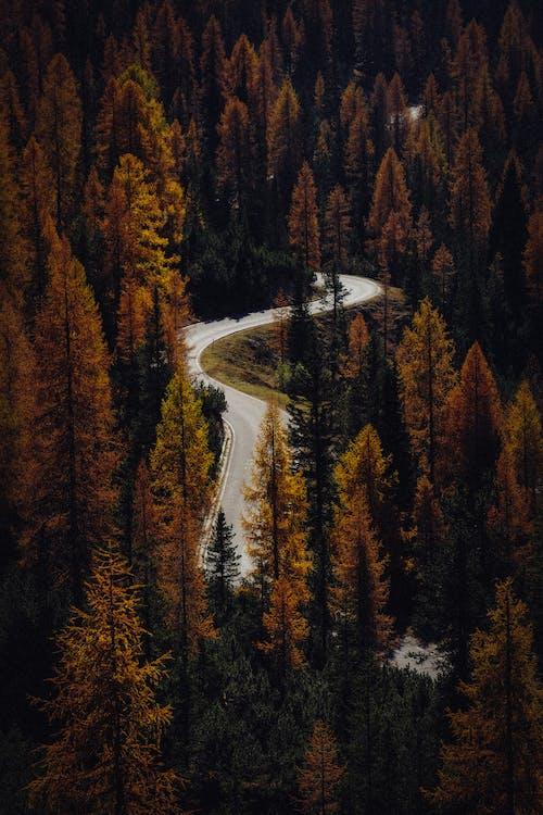 Asphalt Road Between Brown Trees