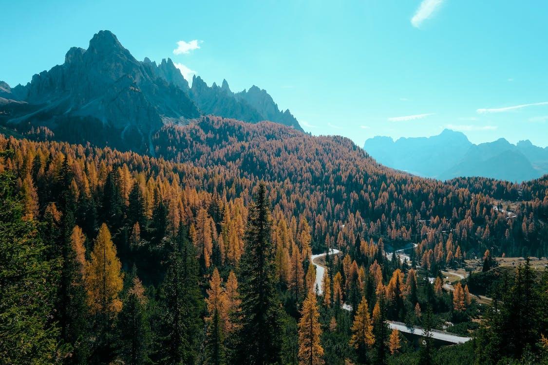alam, fotografi alam, hijau abadi
