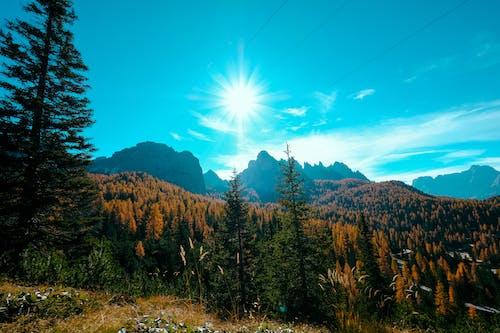 Darmowe zdjęcie z galerii z dolina, drzewa, drzewo iglaste, góra