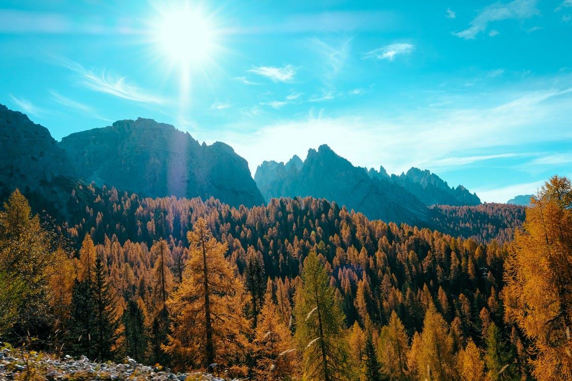Tall Trees Under Blue Sky · Free Stock Photo