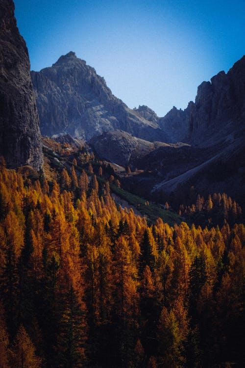 Brown Pine Trees Near Mountains