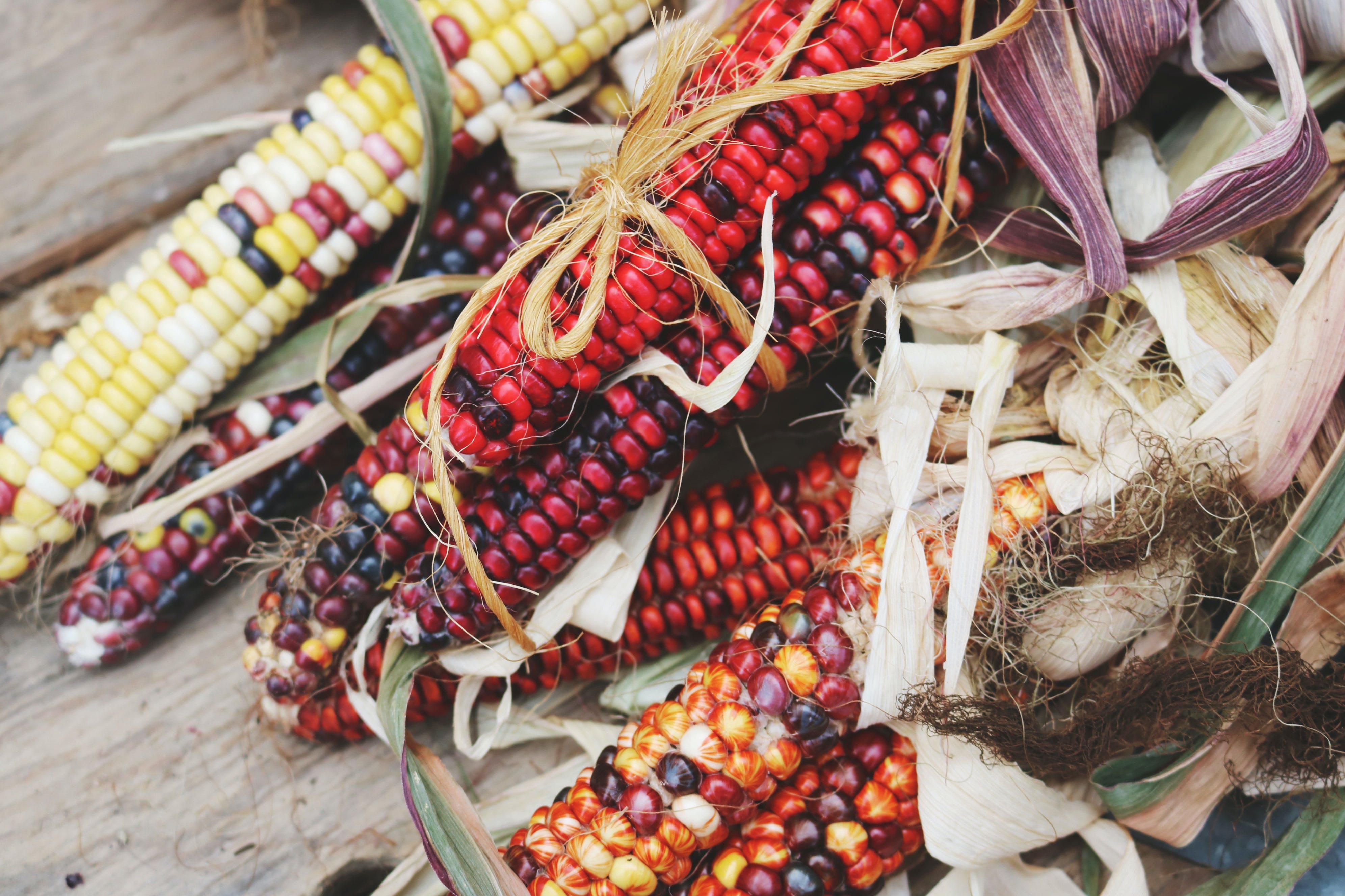 Kostenloses Stock Foto zu bunter mais, ernte, essen, farbe