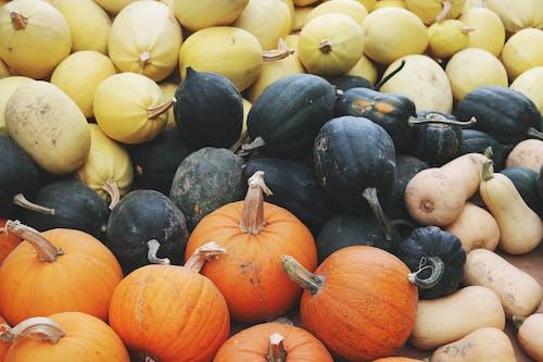 asma kabağı, bal kabağı, beslenme, bitkiler içeren Ücretsiz stok fotoğraf