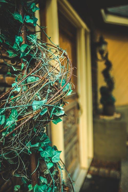 Fotobanka sbezplatnými fotkami na tému dvere, editovať, farby jesene, les