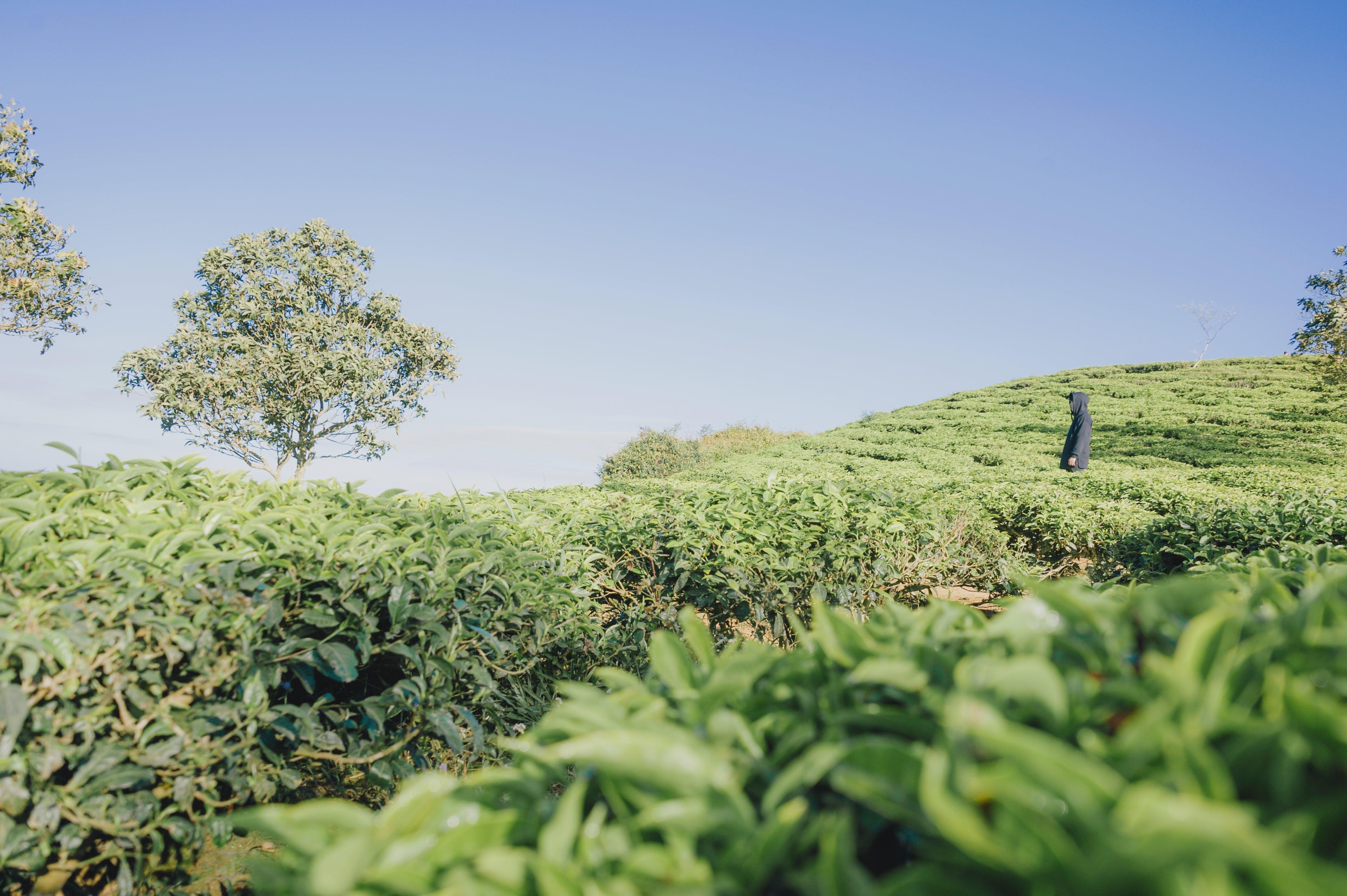Green Plants Covered Terrain