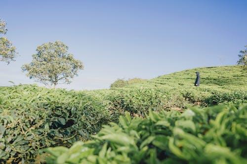 Δωρεάν στοκ φωτογραφιών με αγρόκτημα, ανάπτυξη, βοσκοτόπι, γήπεδο