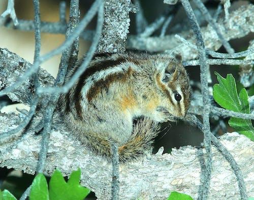 คลังภาพถ่ายฟรี ของ กระรอก, ต้นไม้, น่ารัก, สัตว์