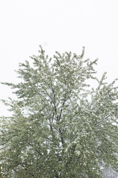 Immagine gratuita di inverno, neve, prima caduta di neve