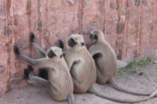 Gratis lagerfoto af monkey sittin