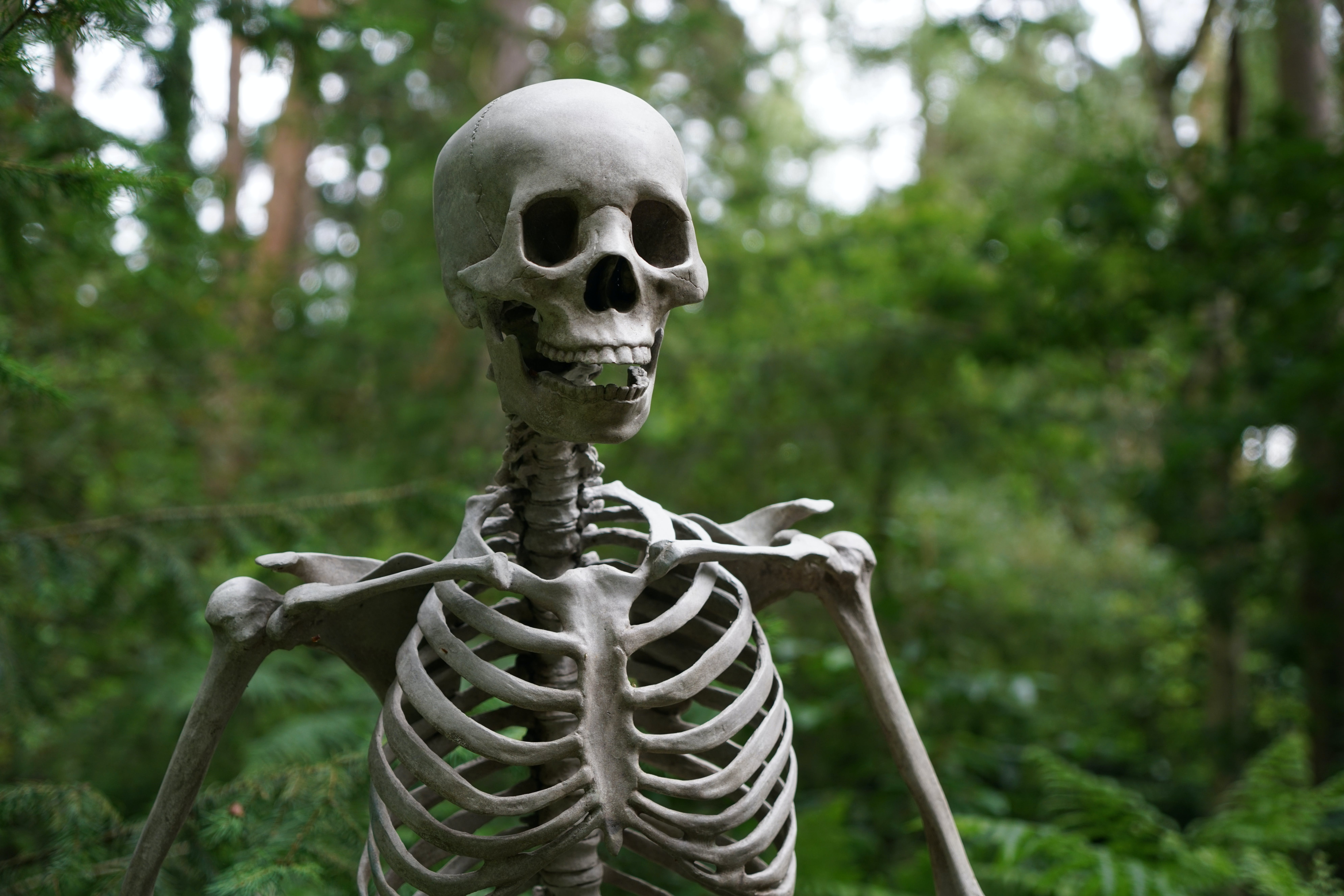 Selective Focus Photography of Skeleton