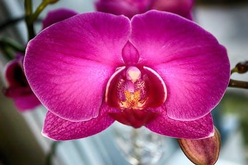 Gratis lagerfoto af blomst, blomstrende, makro, springe ud