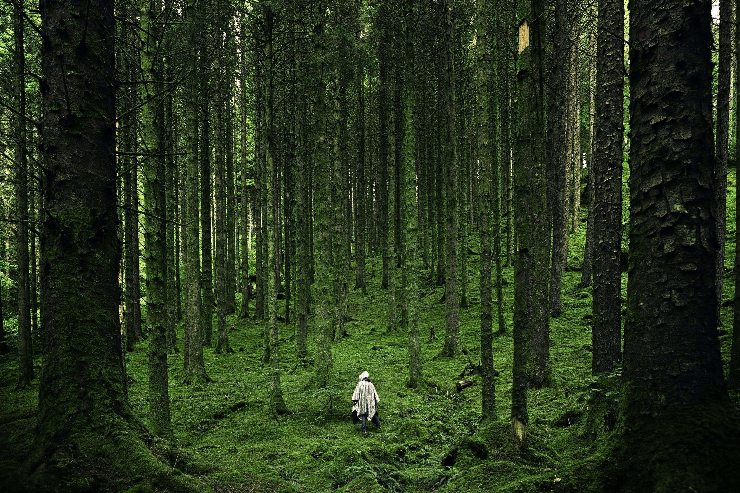 človek, les, lesy