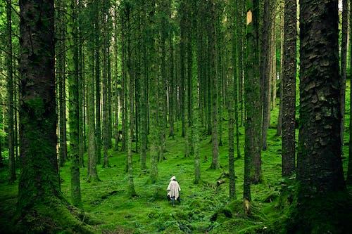 Gratis arkivbilde med grønn, person, reiselyst, skog