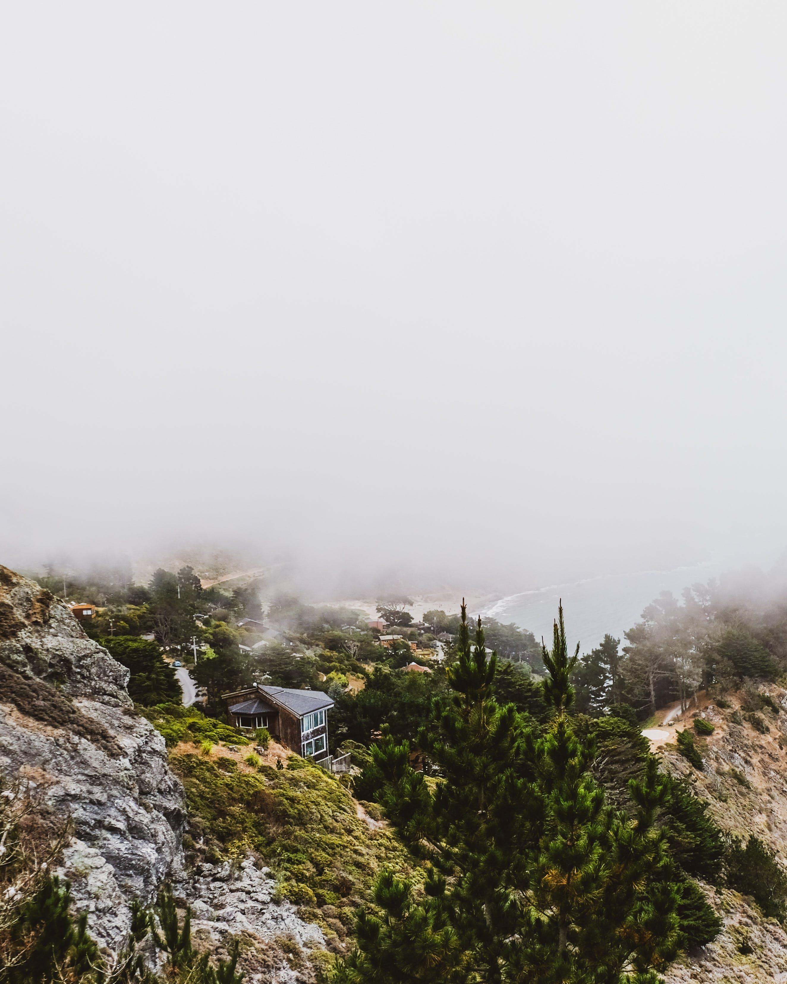 Foto d'estoc gratuïta de aigua, alba, amb boira, arbres