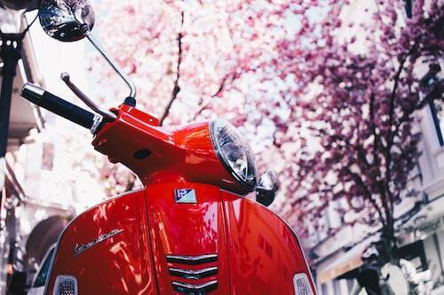 Immagine gratuita di alberi, ciclomotore, cittadina, luce del giorno
