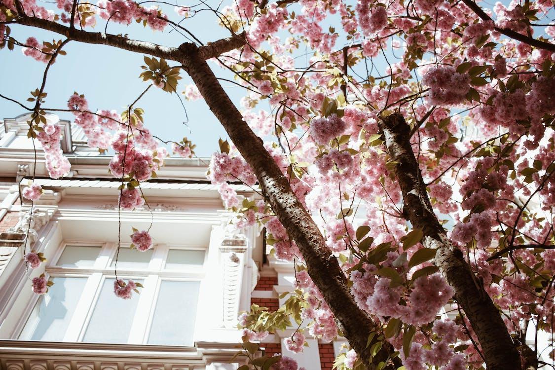 budynek, drzewo, flora