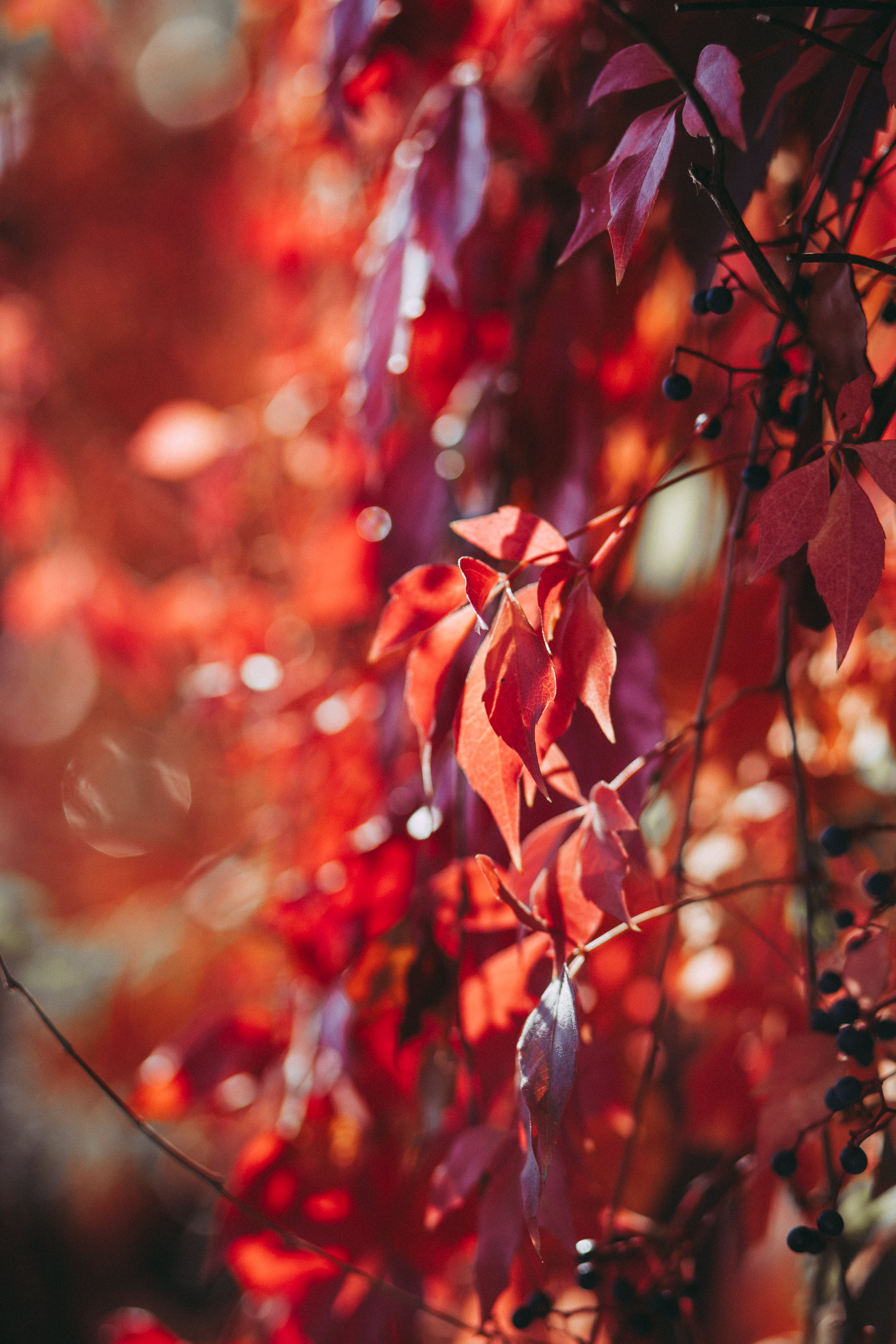 Selective Focus Photography of Red Flowers