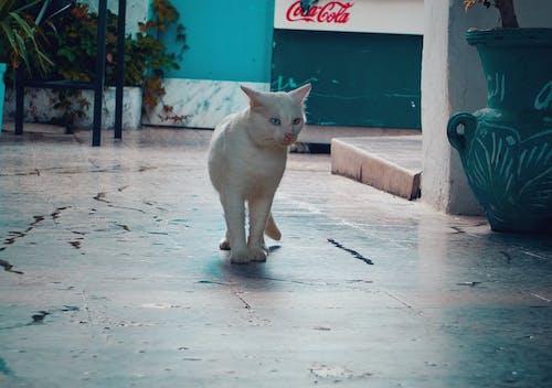 Ingyenes stockfotó állat, állatfotók, macska, nagy sebességű fényképezés témában