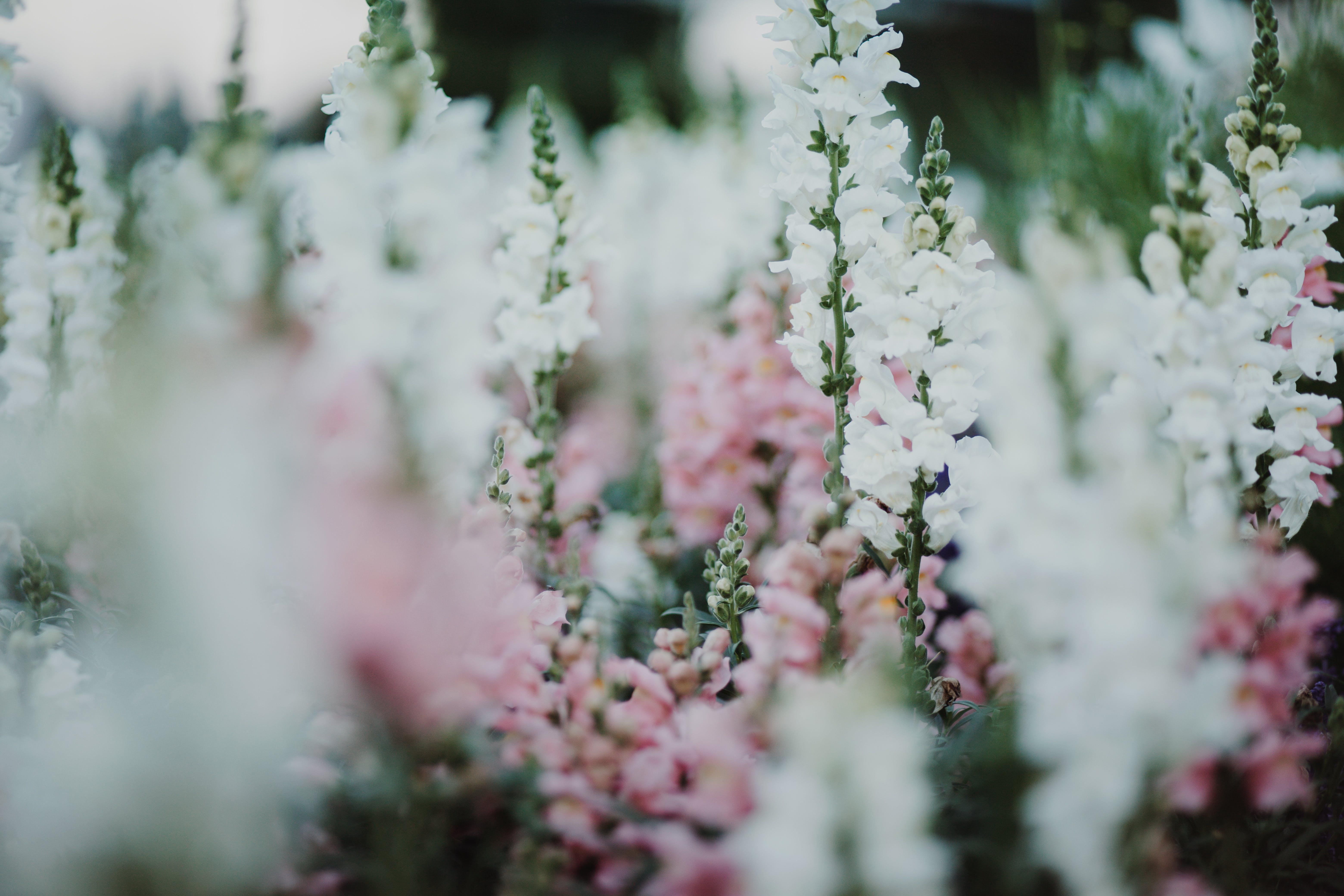 barva, flóra, hloubka ostrosti