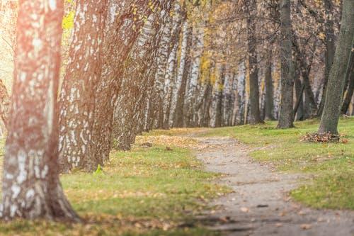 4k 바탕화면, HD 바탕화면, 경치가 좋은, 공원의 무료 스톡 사진