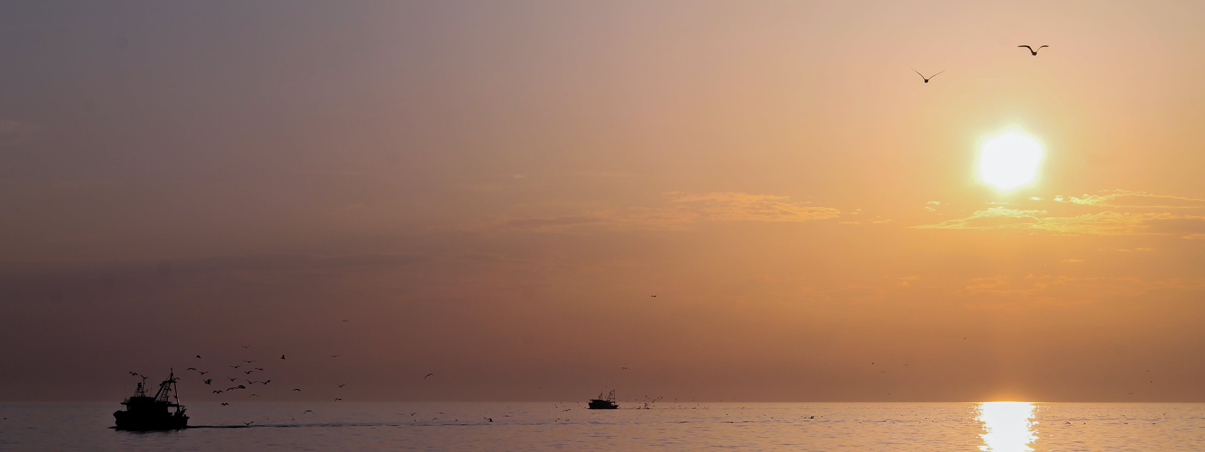 Free stock photo of adriatic sea, birds, fishing, fishing boat